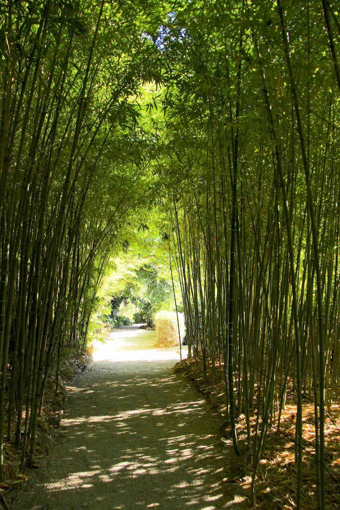 Bambouseraie du jardin japonais
