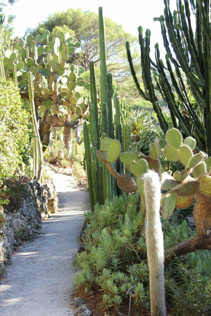 Cactus variés à la Villa Ephrussi de Rothschild