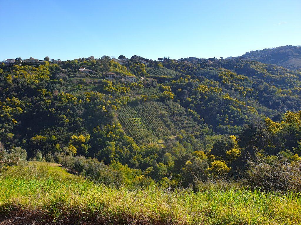 Les collines du Tanneron