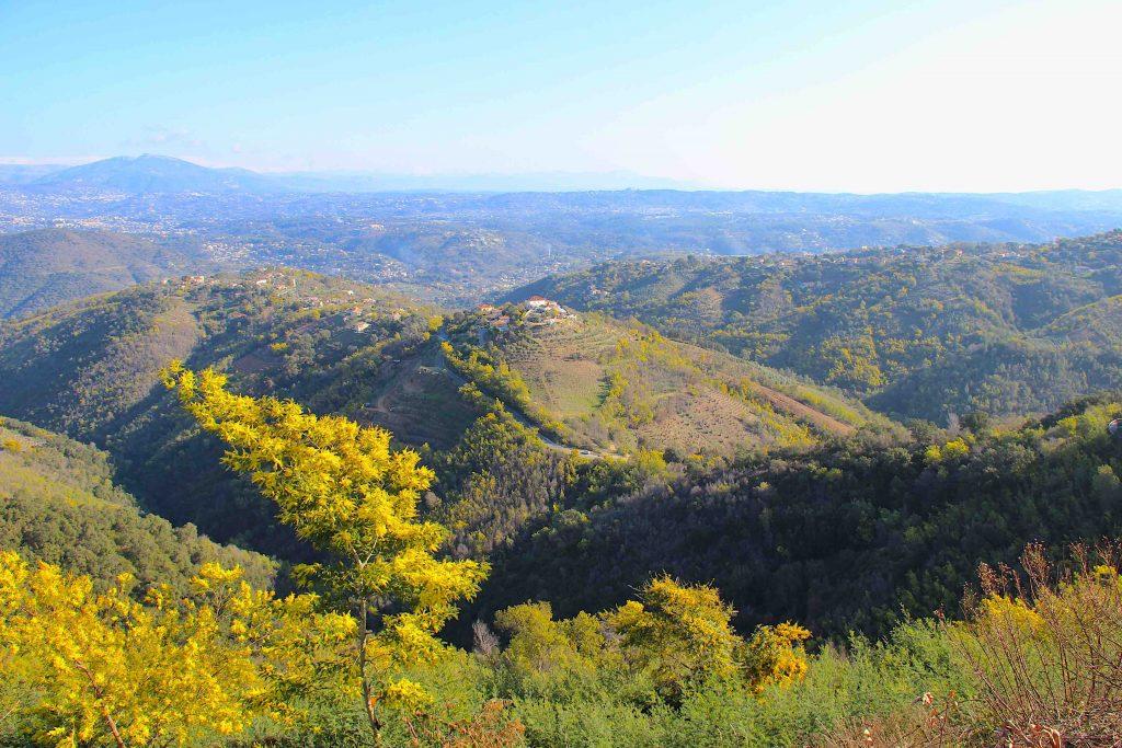Les collines du Tanneron et ses cultures de mimosa
